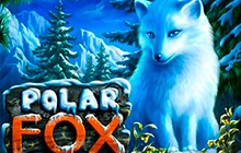 Slot Polar Fox